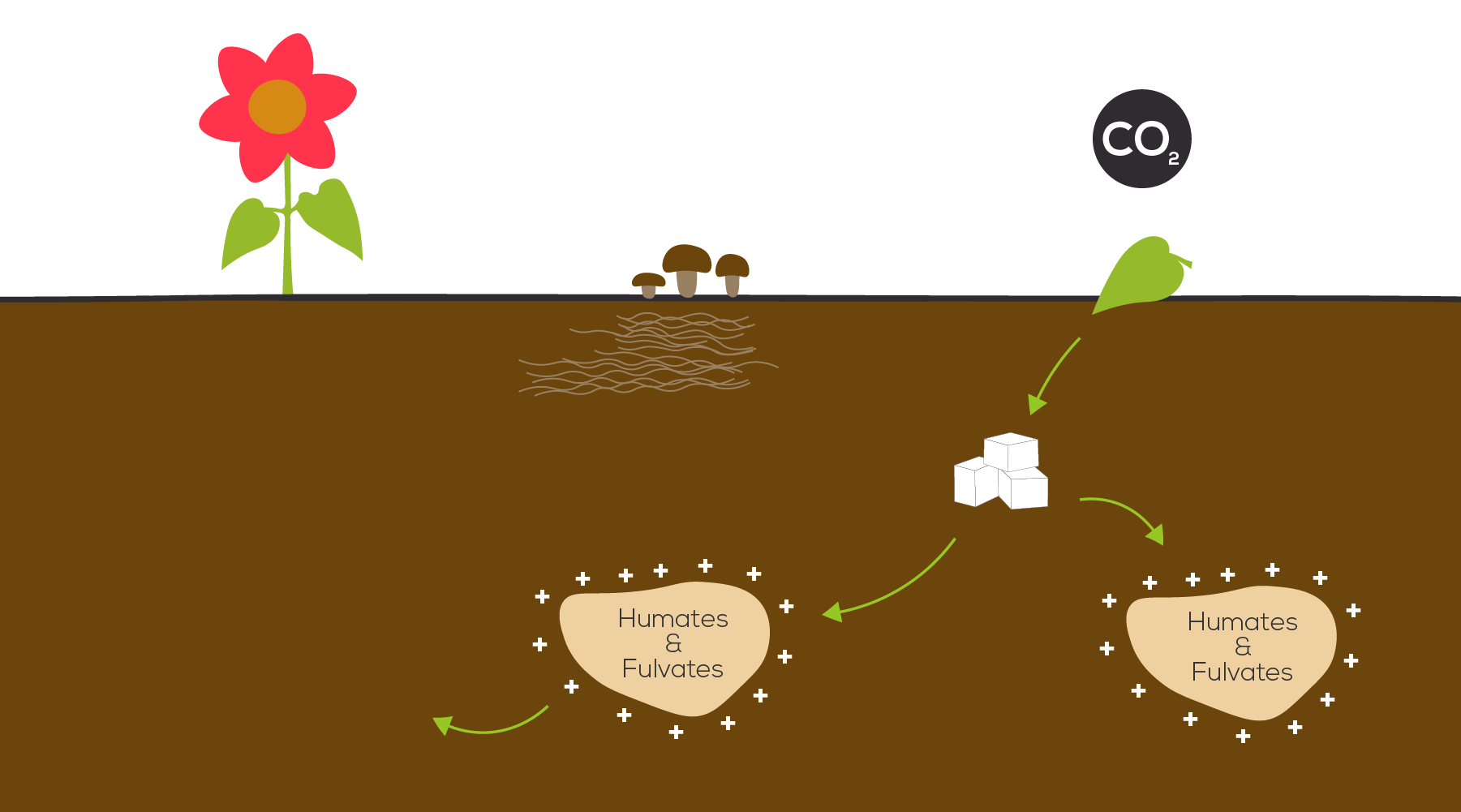 BountyGreens_Carbon