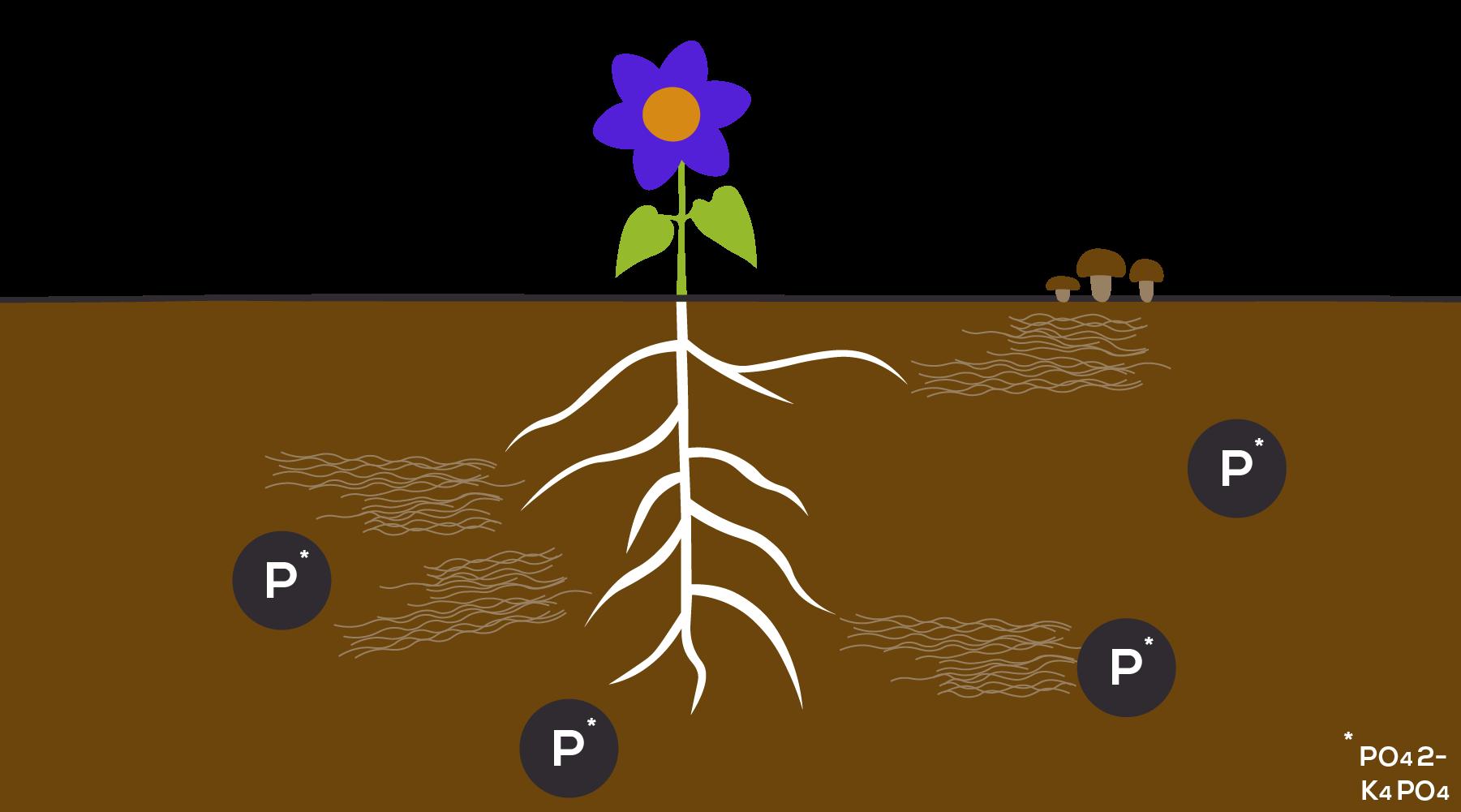 BountyGreens_Phosphorus